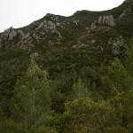 El Valle de la Murta. Alcira.